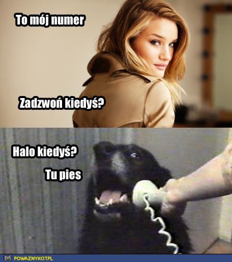 Halo? Tu pies